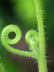 green fern unfurling symbolizing know your whys