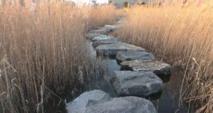 Stepping stones through reeds over water