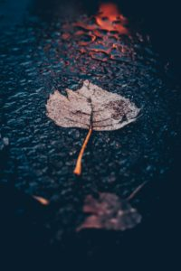 picture of rain and a leaf on the road showing the power of thought when we get anxious or depressed